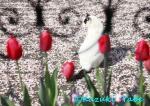 4月 チューリップ 『春を惜しむ振返り美人』