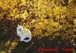 1月 雪柳の黄葉 『金幕の歌姫』