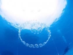 第13回水中展覧会アクアート イン 奄美大島 (奄美大島 2010/8/21~8/25)-1