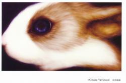 東恩納祐一・山脇紘資・奥天昌樹・前田朋子4人展 (ツァイト・フォト・サロン 2010/9/24~11/6)