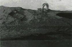 「水量-鉄・桜」 1984/2000-2006 (部分)
