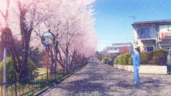 佐藤雅晴 エレジーシリーズ 桜 | elegy series SAKURA DVD / BD, color 2011
