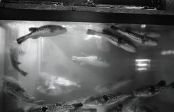 2012/4/10-4/15 TOTEMPOLEPHOTOGALLERY