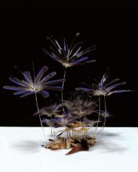 """小松宏誠  「Lifelog」  2010  50 x 50 cm  ヤマショウビン、アクリルケース     """"Lifelog_Black-capped Kingfisher""""  Black-capped Kingfisher,  acrylic case"""