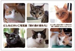 猫専門のペットシッター『キャットシッターNEKO+(ねこぷらす)』代表にしたにけいこ写真展。 さまざまな家族の事情で「猫の森」へやってきた「猫の森の猫たち」 ~猫たちはドラマを背負ってやってきた~
