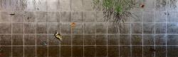 『回想』 150cm x 50cm アクリル・箔・キャンバス