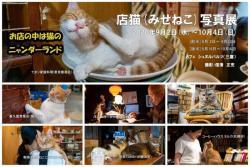 店猫写真展202009