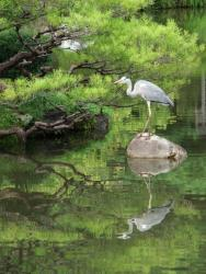 "Takaho Iwase ""Walking around Kyoto"""