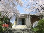 ギャラリー唐橋 桜の季節
