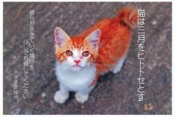 吉祥寺猫祭り 2015 猫は三月をヒトトセとす かざままゆみ