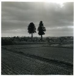 村越としや 「木立を抜けて#06」2009年 ゼラチン・シルバー・プリント ペーパーサイズ:27.9x35.6cm イメージサイズ:24.8x24.8cm