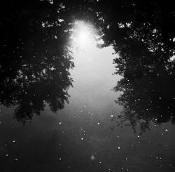 楊 喩雯 写真展 / 「月光沼泽」
