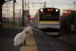大塚義孝写真展 「駅守猫 ~工場街の無人駅で~」
