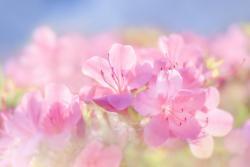 花の便り―淡い蜜の味。