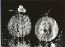 《タコ+メロン》1989年 写真:今 道子©Michiko Kon , Courtesy of PGI