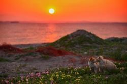 星野俊光写真展 「猫皆幻化」
