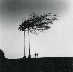 大気汚染による枯木のインスタレーション