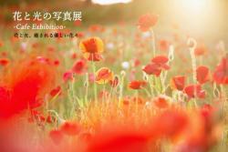カフェ・パピエ 花と光の写真展