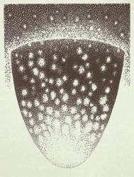 「ほしをはなつ」 2019 木版画 30×22cm