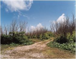 《道―サイパン島在留邦人玉砕があった崖に続く道》「Scene」より 2003 Courtesy of ShugoArts