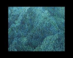 In-between Land:池田学、インディゲリラ、天明屋尚、エンタン・ウィハルソ@Mizuma, Kips & Wada Art、ニューヨーク