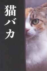 猫ばか かざままゆみ写真展