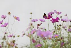 藤岡直樹 展 『flora』 (2013/5/14-6/8 EMON PHOTO GALLERY)