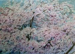 「桜舞う(しだれ桜)」F30号 油絵