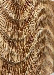 ʻ Flow ' Pinewood, pine resin, kakishibu, beeswax, plaster, etc. 500×500×40mm 2019(部分)