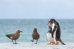 篠田岬輝作品展「ペンギンたちの棲むところ」