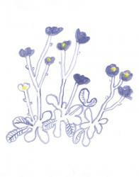 須山奈津希 個展「flowers」