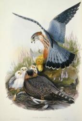 ジョン・グールドの鳥類図譜 -19 世紀 描かれた世界の鳥とその時代