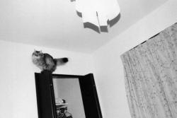 ジョン サイパル 写真展「随写 vol.10」