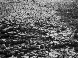 長谷川友里 写真展 「Anthropocene」