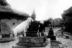 ネパール トリスリ 1972-1973年   ©Hitomi Watanabe